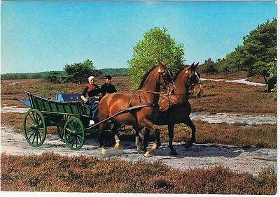 Holland Netherlands Postcard Beekbergen Horses and Wagon Countryside