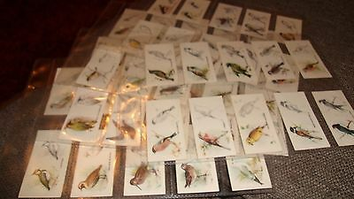 Godfrey Phillips - Bird Painting  Full Set 50 Cigarette Cards In Sleeves  - 1938