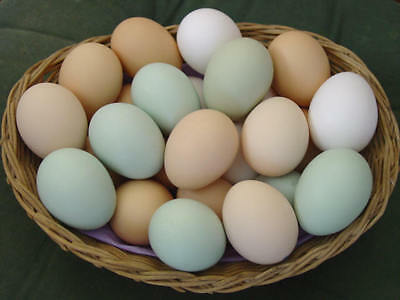 6 MIXED PURE BREED (chickens) L/F hatching eggs