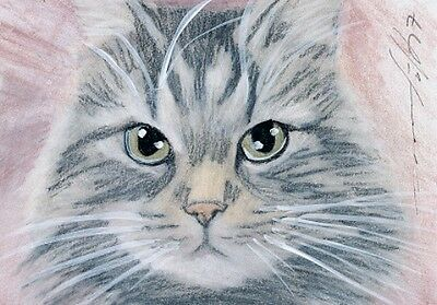 ACEO original pastel drawing maine coon cat by Anna Hoff