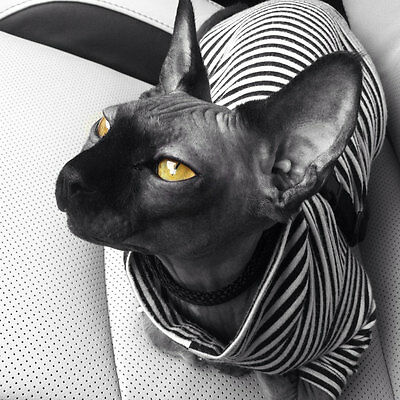 "The ""Convict"" T-Shirt for a Sphynx Cat - Hand Made by Sphynx Clothes"