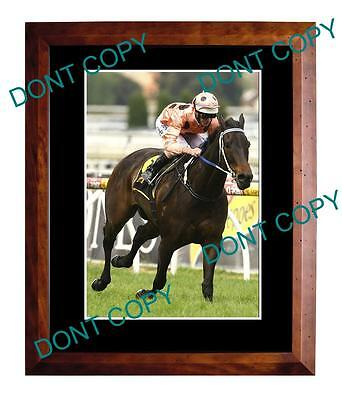 Black Caviar, Horse Racing Champion A3 Large Photo 2