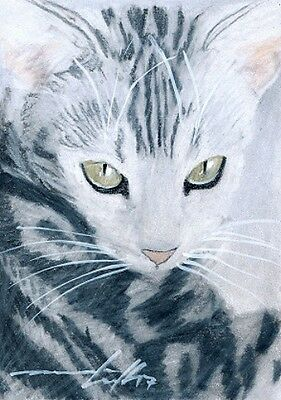 ACEO original pastel drawing silver tabby cat by Anna Hoff