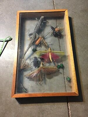 Lot Lizard ,bugs,butterflies Etc Specimen In Case 16x9.6x1.75""