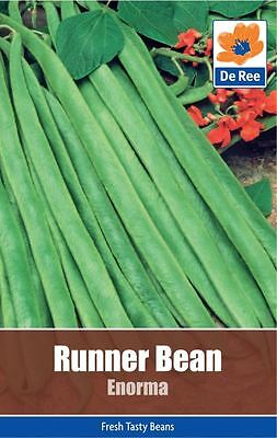 2 PACKS of RUNNER BEAN Enorma VEGETABLE Garden SEEDS