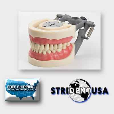 Dental Typodont Model 200 W/ Removable Teeth Kilgore Nissin Type 10 Free Molars