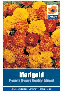 2 PACKS of MARIGOLD French Dwarf Double Mixed FLOWER Garden SEEDS