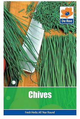 2 PACKS of CHIVES Garden HERB SEEDS