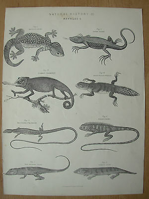 Antique Victorian Natural History Print Reptiles 1 - A. Fullerton & Co