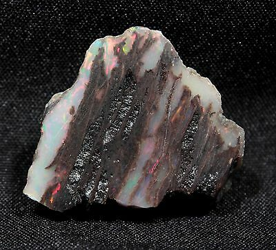 Precious Stable Opal Conk Wood from Virgin Valley Nevada - 12.3 ct - opalized