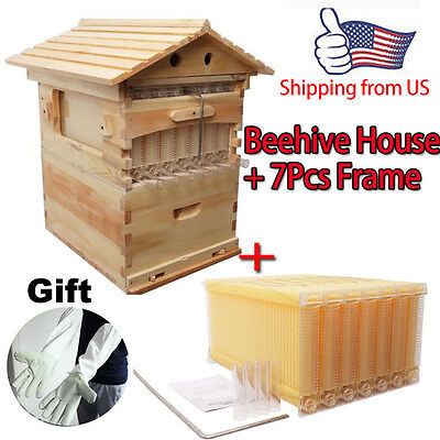 7Pcs Upgraded Auto Flow Raw Honey Beehive Frames + 1Pc Bee Hive Beekeeping Tools