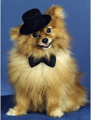 20 Pet Note cards Dog Pomeranian with Black Hat and Tie