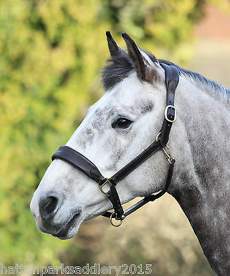 SHIRES BLENHEIM CUSHIONED LEATHER TRAVEL HEADCOLLAR - COB, FULL or EXTRA FULL.