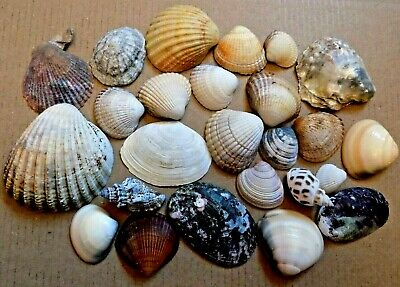Mixed Assorted Sea Shells Natural Beach Seashells Aquarium Decoration Craft 100g
