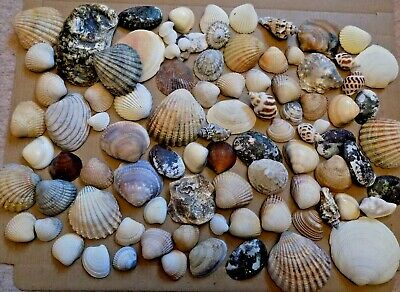 Mixed Assorted Sea Shells Natural Beach Seashells Aquarium Decoration Craft 400g