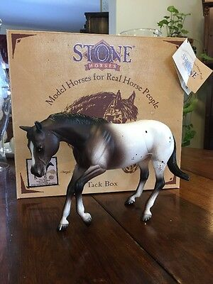 EARLY PETER STONE APPT TO APPEAL APPALOOSA DARK CHESNUT W/BLANKET No.9802  USA