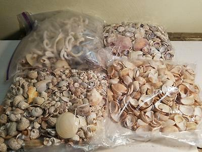 Vintage 7 Pounds Assorted Seashell Sea Shell Worms Lot Crafts Collectors Decor