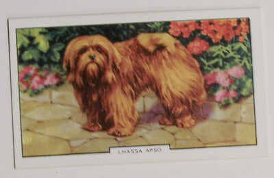 1930's Gallaher Dogs Card  Lhasa Apso #41