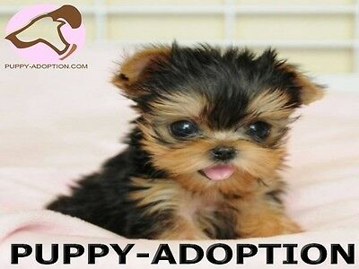 Puppy-Adoption.com    ...Puppy Adoption Domain Name for Sale! ...High Traffic!
