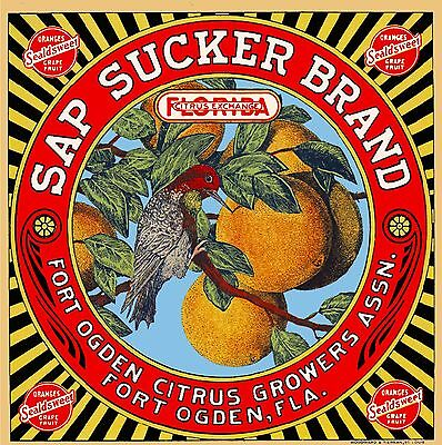Fort Ft. Ogden Florida Sap Sucker Bird Orange Citrus Fruit Crate Label Print 2