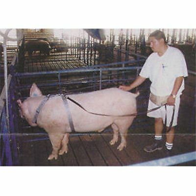 Swine Boar Harness Tether AI Breeding Hogs Pigs Adjustable Pig Harness