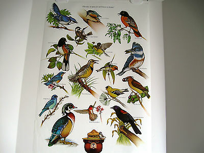 "Vintage U. S. Forest Service Poster-Thanks To You, We Still...Birds 20x30""  1980"