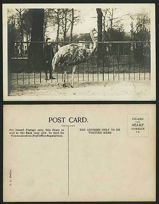 OSTRICH BIRD Struthio Camelus Zoo Animals Old Postcard