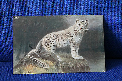 Animal Postcard Snow Leopard (Close Up Animals)