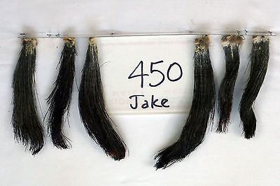 6 EASTERN WILD TURKEY JAKE BRUSHES-TAXIDERMY  lot450