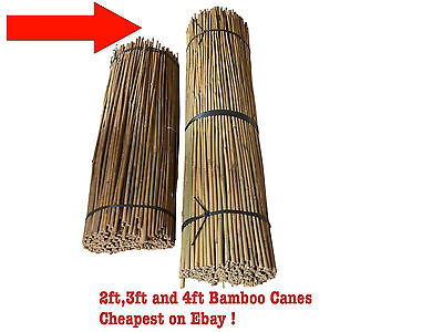 2Ft 3Ft 4Ft 5Ft Bamboo Canes Bamboo New Garden Plant Support Sticks Cheap!