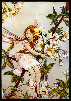 Fairy stained glass, kilnfired glass painting, flower fairy, wild cherry blossom