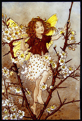 Fairy kilnfired glass painting, flower fairy, blackthorn stained glass, gift