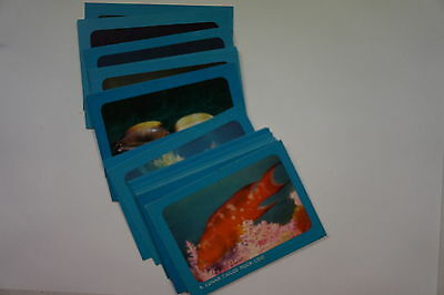 Sanitarium Australian Underwater World set of 25 cards 1964
