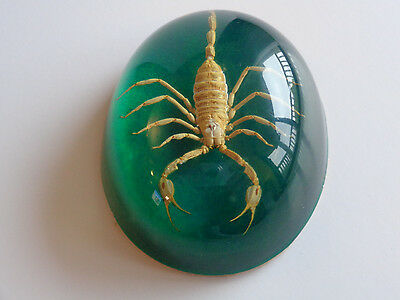 Authentic Real Scorpion Acrylic Paperweight - Emerald
