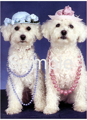 Pet Notecards Dog Bichon Frise Girls