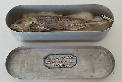 Cabinet De Curiosites - Poisson Naturalise - Oddities - Fish Taxidermy