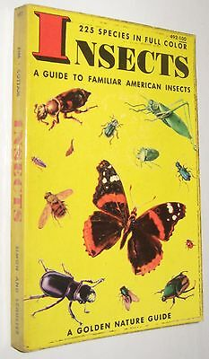 Insects - A Guide To Familiar American Insects - Ilustrado - En Ingles