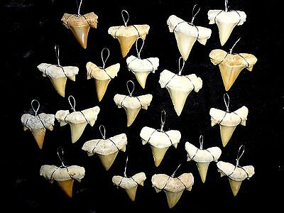 ONE wire wrapped fossil Shark tooth necklace, pendants, shark teeth,surfer