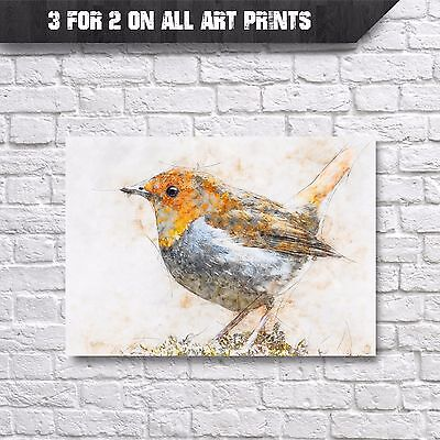 Red Robin Bird Wall Art Print - Pencil & Watercolour Painting - A4 Prints