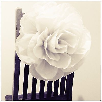 Paperbloomz Large White Roses X 5 Bulk Tissue Paper Wall Decorations
