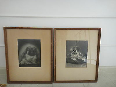 Pair of Vintage Signed Studio Photo Portraits Pekingese Dogs Matted/Framed Rare!