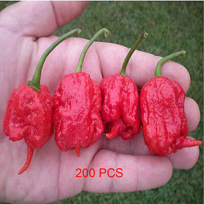 200PCS Red Fresh Carolina Reaper Chilli Pepper Seeds - Super Hot 100% GENUINE