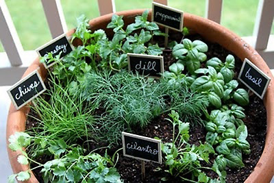 Complete Herbs Seed Collection | 10 packets seeds | Your own mixed Herb Garden