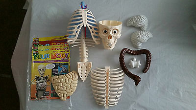 Billie Bones How Your Body Works Job Lot Body Parts and few magazines