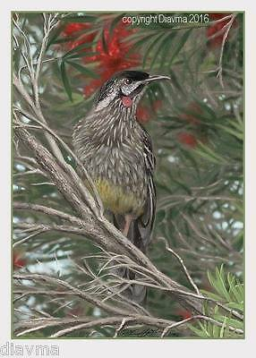 © ART  Painting Wildlife Australian Red Wattle Bird Original artist print by Di