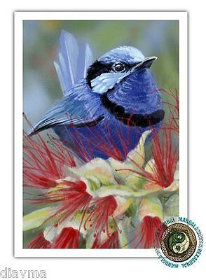 © ART - Art splendid blue fairy wren Bird wildlife Original Artist Print by Di