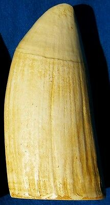 #6 (IMITATION REPLICA)  Whale Tooth Scrimshaw,  Engraving