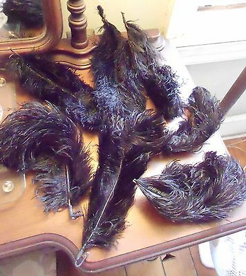 Lot of 19 Antique Black Ostrich Feathers Millinery Hat Making Mourning Attire