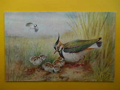 ROLAND GREEN Lapwings & Young *Vintage* A C Black c1940s Artist Drawn Birds