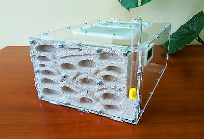 Ant farm ACFK-4. New professional formicarium - ant nest for LIVE ants